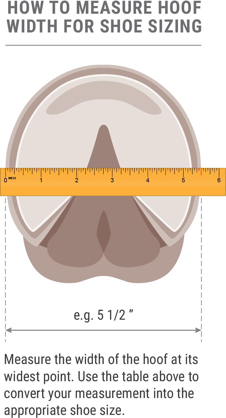 measuring hoof width diagram